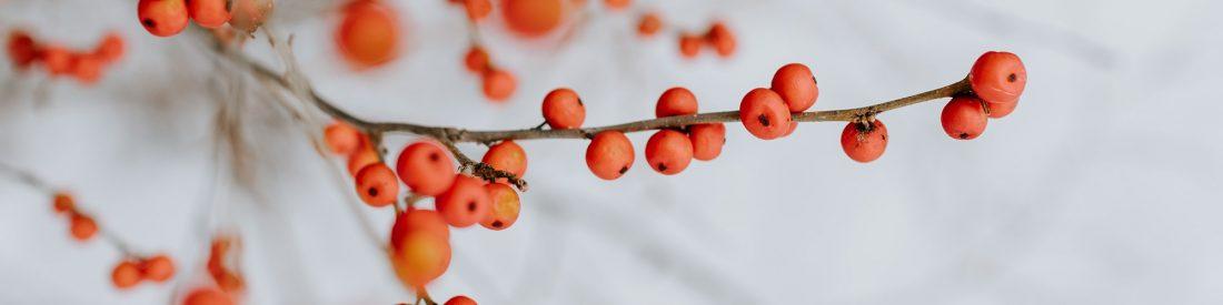 title_berries_panorama